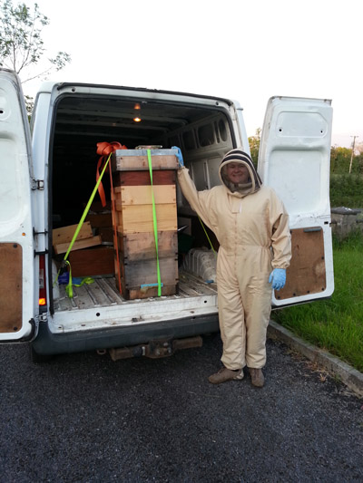 Roan McGreevy moving bee-hives